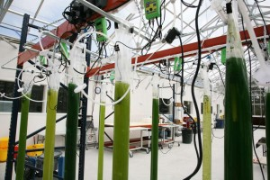 ExxonMobile and SGI's Algae Research